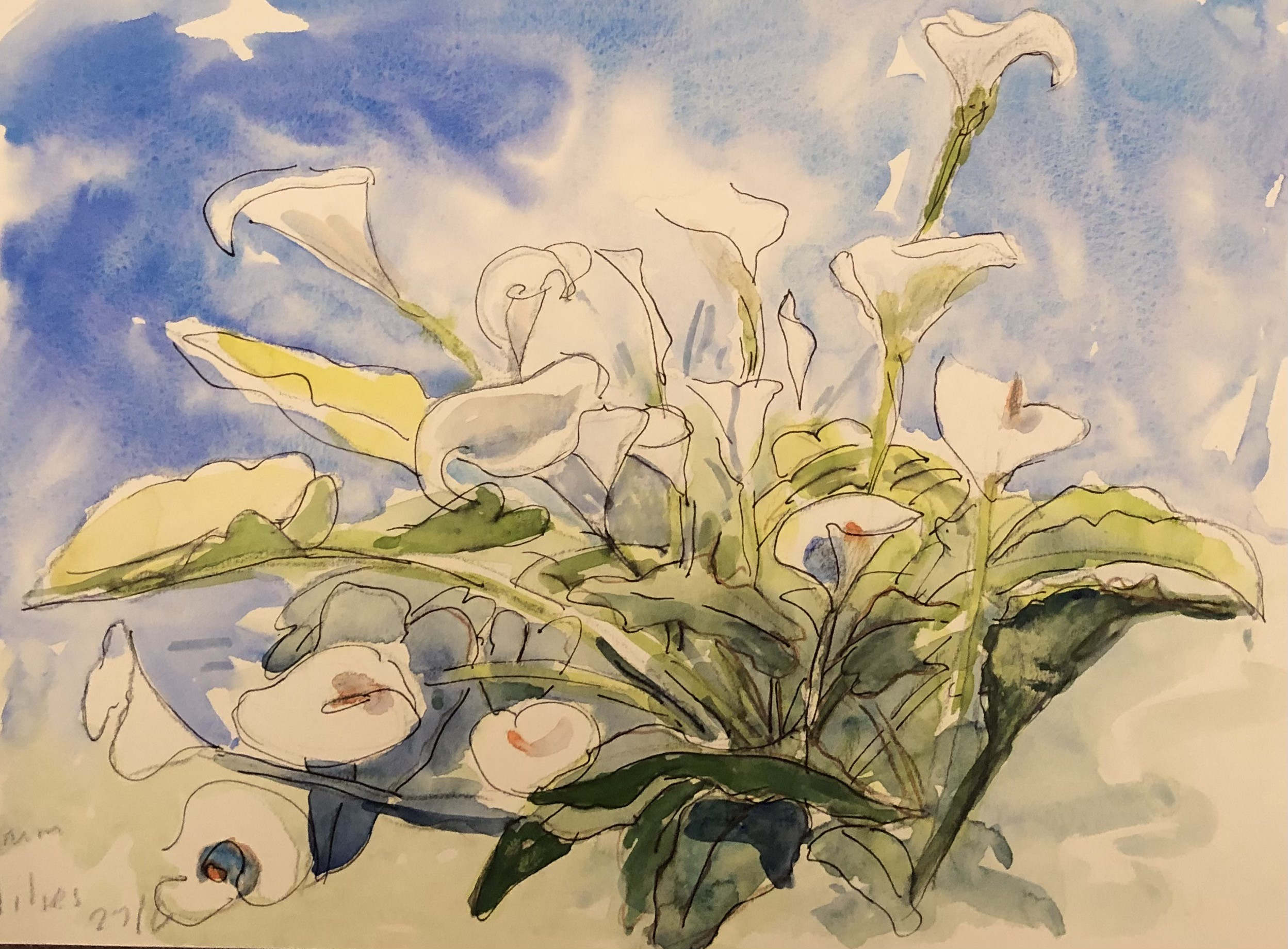 Arum Lilies    Watercolour     23 x 33 cm     (framed size 43.5 x 54 cm) White frame.  Blue mount