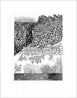 Secret Garden     Pen & Ink     24 x 17.5 cm    (Unframed) Off-white mount