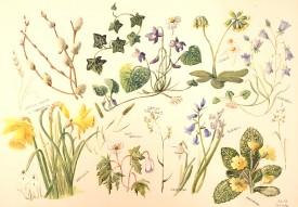 Flowers I    Watercolour     24 x 34 cm     (framed size 45 x 55 cm) White frame.  Dark green mount
