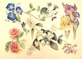 Flowers II    Watercolour     28 x 38 cm     (framed size 48.5 x 59cm) White frame.  Dark green mount