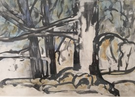 Study of Trees  11x16 ins   Ink & Colourwash